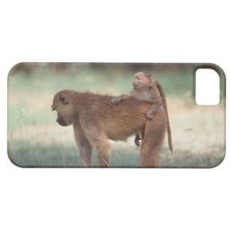 Anubis Baboon iPhone SE/5/5s Case