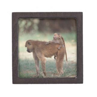 Anubis Baboon Premium Jewelry Boxes