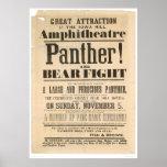 Anuncio de la lucha de la pantera y del oso (1293A Posters