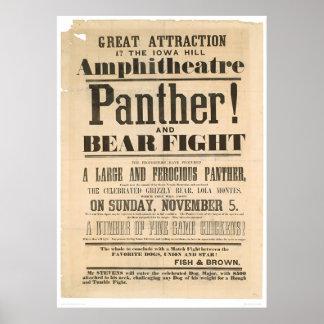 Anuncio de la lucha de la pantera y del oso (1293A Póster
