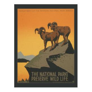 Anuncio del vintage del coto de los parques nacion tarjeta postal