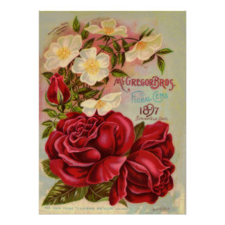 Anuncio floral de la flor del vintage de los rosas póster
