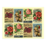 Anuncios subiós vintage del cultivo de los rosas d