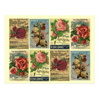 Anuncios subiós vintage del cultivo de los rosas d postales