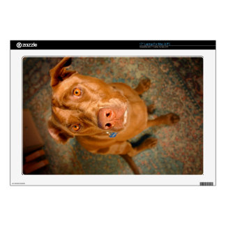 Anxious Chocolate Lab Pit Mix Dog Skin For Laptop