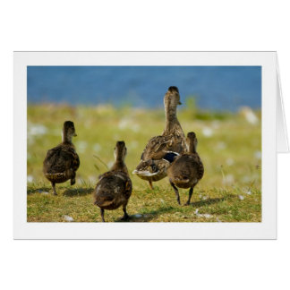 Any Occasion - Note Card - Little Duck Family Off