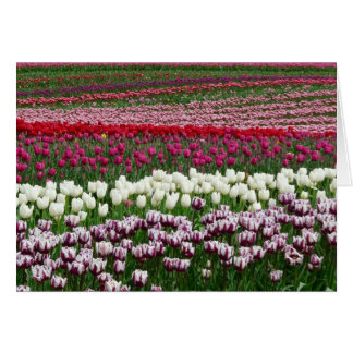 Any Occasion Pretty Tulip Flowers in Rows Card