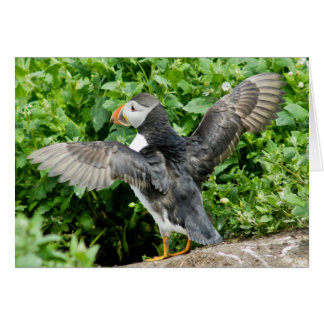 Any Occasion Puffin Greeting Card
