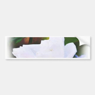 Any Occasions,The White Rose_ Bumper Sticker
