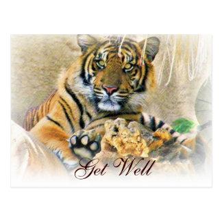 any Occasions,Tiger Cub_ Postcard