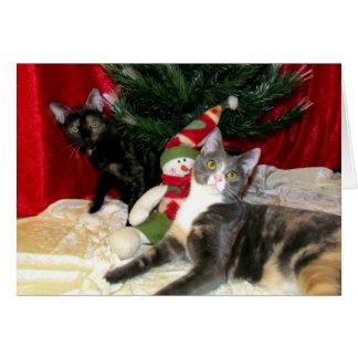 Anya and Tiana's Christmas Card (Cat / Kitten) .