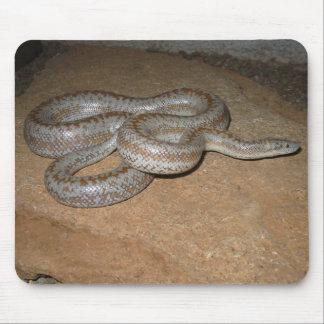 Anza Borrego Desert Rosy Boa Mousepad