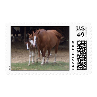 AP- Horses Photography Postage Stamp