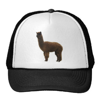 Apaca stud trucker hat