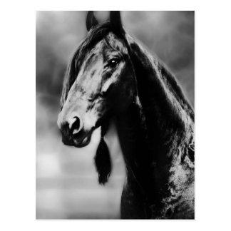 Apache horses postcard
