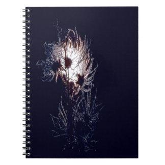 Apache-Plume Note Books