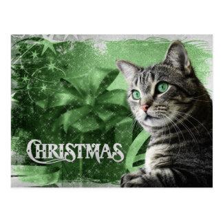 APAL - Gato de Tabby de plata del navidad Postales