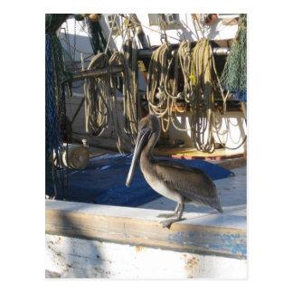 Apalachicola Pelican on Board Postcard
