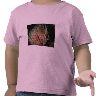 Aparato de alimentación y respiratorio expuesto he camiseta