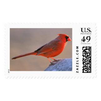 Aparently Cardinal Postage