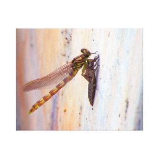 Aparición de la libélula impresión en lona estirada