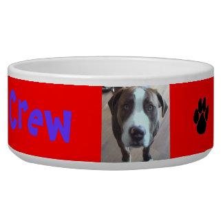 APBT a family dog too! Bowl