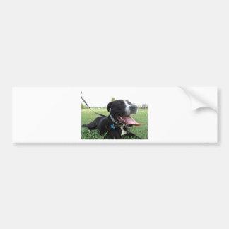 APBT American Icon & Family dog Bumper Sticker