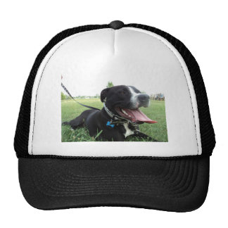 APBT American Icon & Family dog Trucker Hats