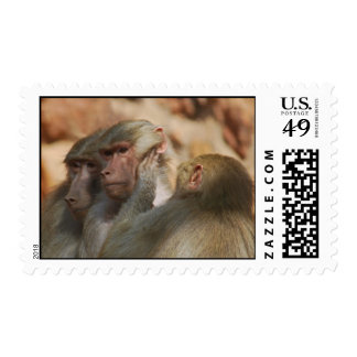 Ape caring for one another postage