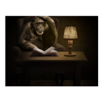 Ape Chimpanzee Monkey Postcard