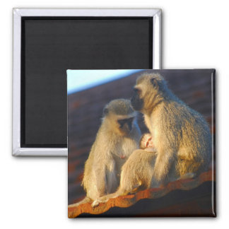 Ape family moments photo magnet