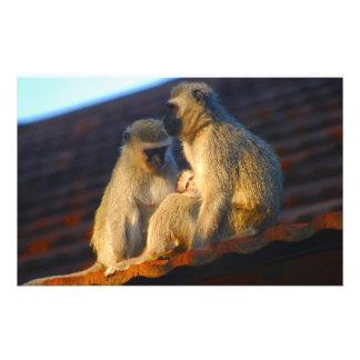 Ape family moments photo stationery