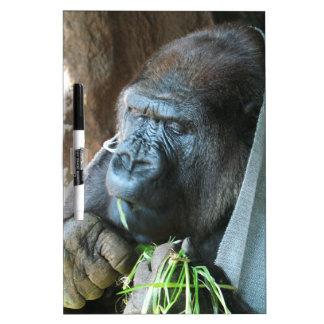 Ape hood ~ Japanese Gorilla Eating Dry-Erase Board