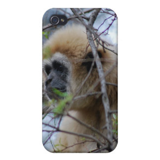 Ape Keeper of the sacred forests iPhone 4/4S Cover