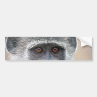 Ape looking into ones eyes close up bumper sticker