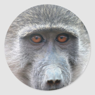 Ape looking into ones eyes close up classic round sticker