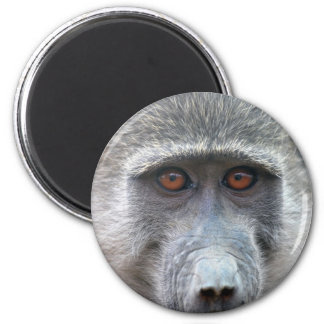 Ape looking into ones eyes close up magnet