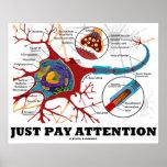 Apenas atención de la paga (neurona/sinapsis anató posters