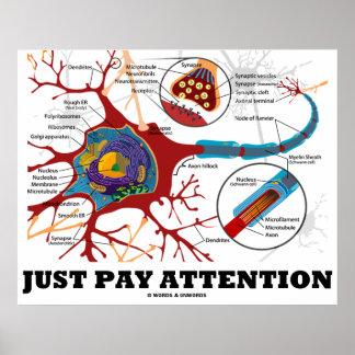 Apenas atención de la paga (neurona/sinapsis anató póster