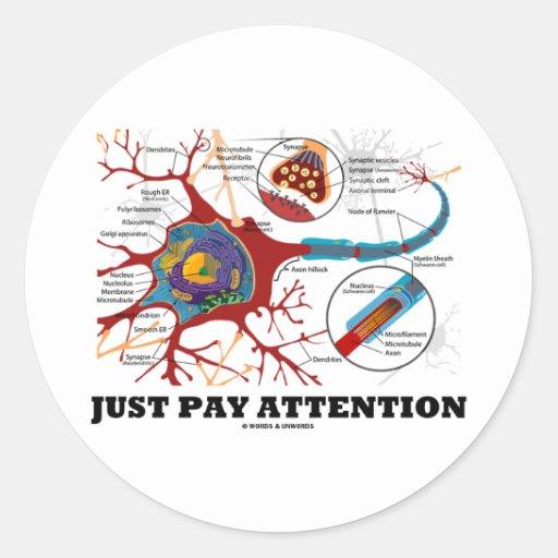 Apenas atención de la paga (neurona/sinapsis) pegatinas redondas