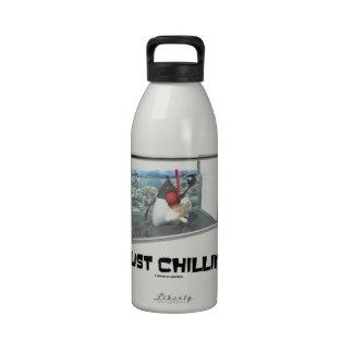 Apenas Chillin (acuario de duque Snorkeling de Jav Botellas De Beber