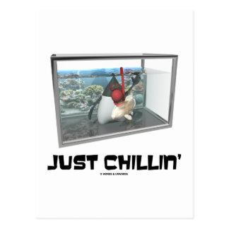 Apenas Chillin (acuario de duque Snorkeling de Jav Postales