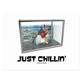 Apenas Chillin (acuario de duque Snorkeling de Jav Postal