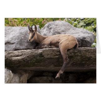 Apenas Chillin, cabra de relajación de Chamoix del Tarjeta De Felicitación