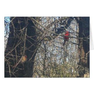 Apenas Chillin - tarjeta de nota de los cardenales