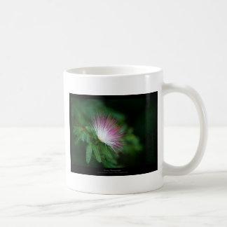 Apenas flor rosada y blanca Caliandra 011 de una f Taza