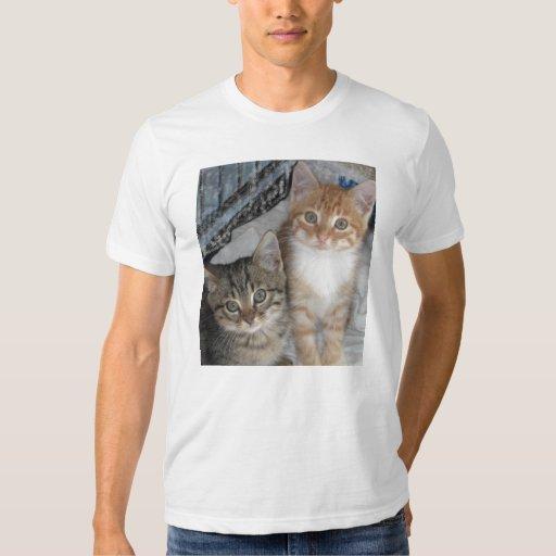 Apenas gatitos camisas