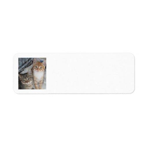 Apenas gatitos etiquetas de remite