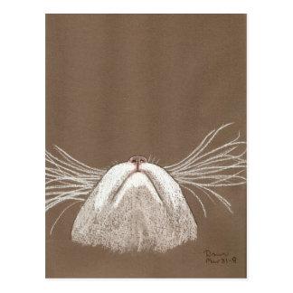 apenas las barbas de los gatos tarjeta postal