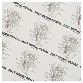 Apenas siendo humor anatómico renal de Nephron Telas